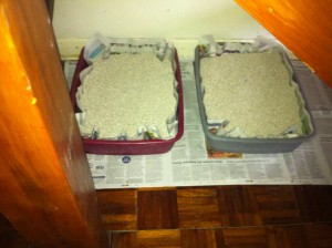 Cat trays lined with the Daily Mail and Daily Telegraph